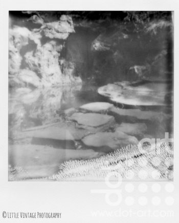 Fairytale in Sefton Park - Water by Rachel Brewster