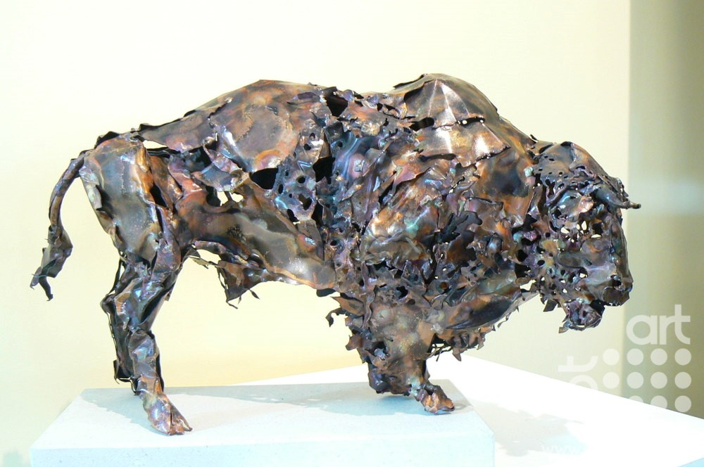 North American Bison by