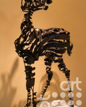 Zebra Foal by