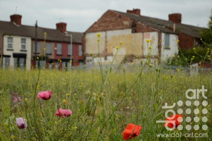poppies-on-a-deralict-site by olivia june