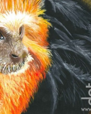 Golden Tamarin by Nyah Boorman
