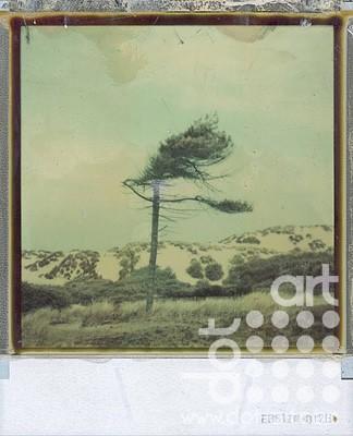 tree 71