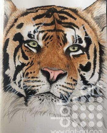 Nyah Boorman Tiger
