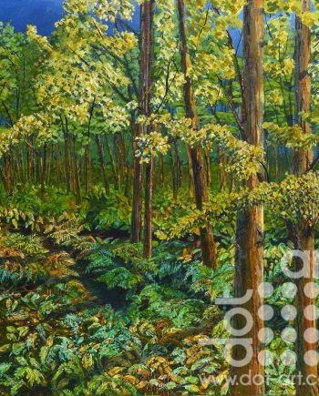 Eucaplyptus and Ferns by Rob Edmondson