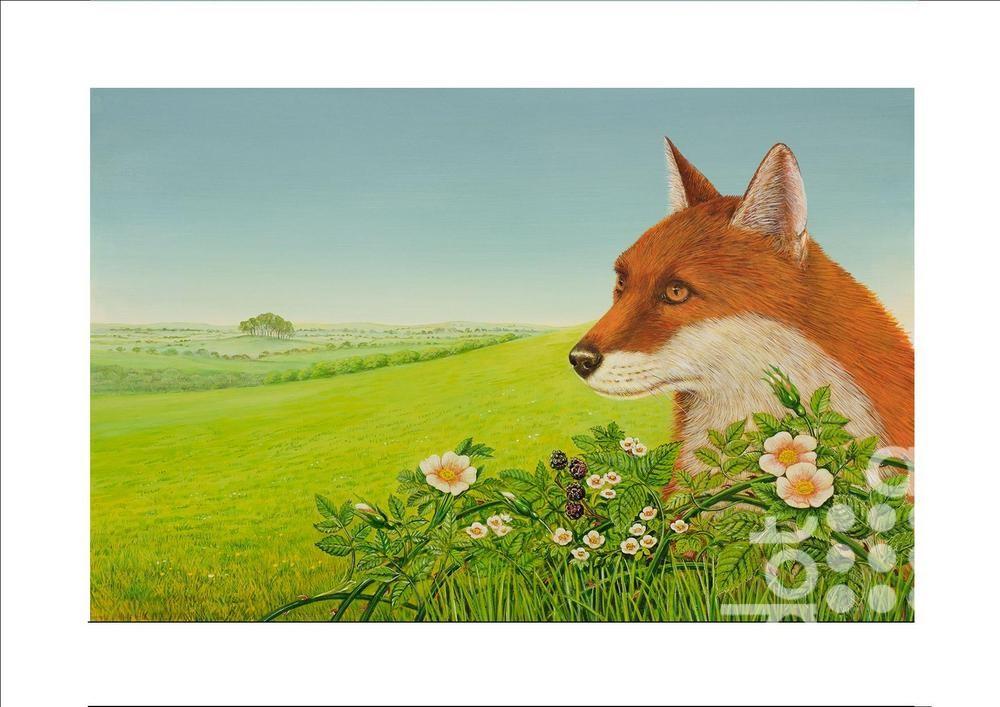 Fox fields by Frances Broomfield