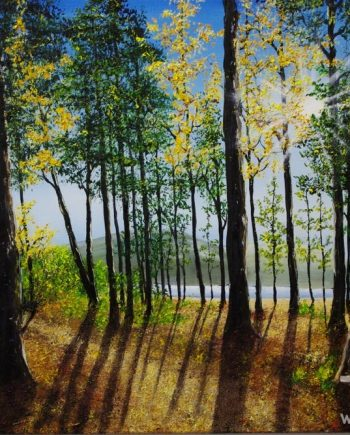 Forest walk to the lake by Hazel Thomson