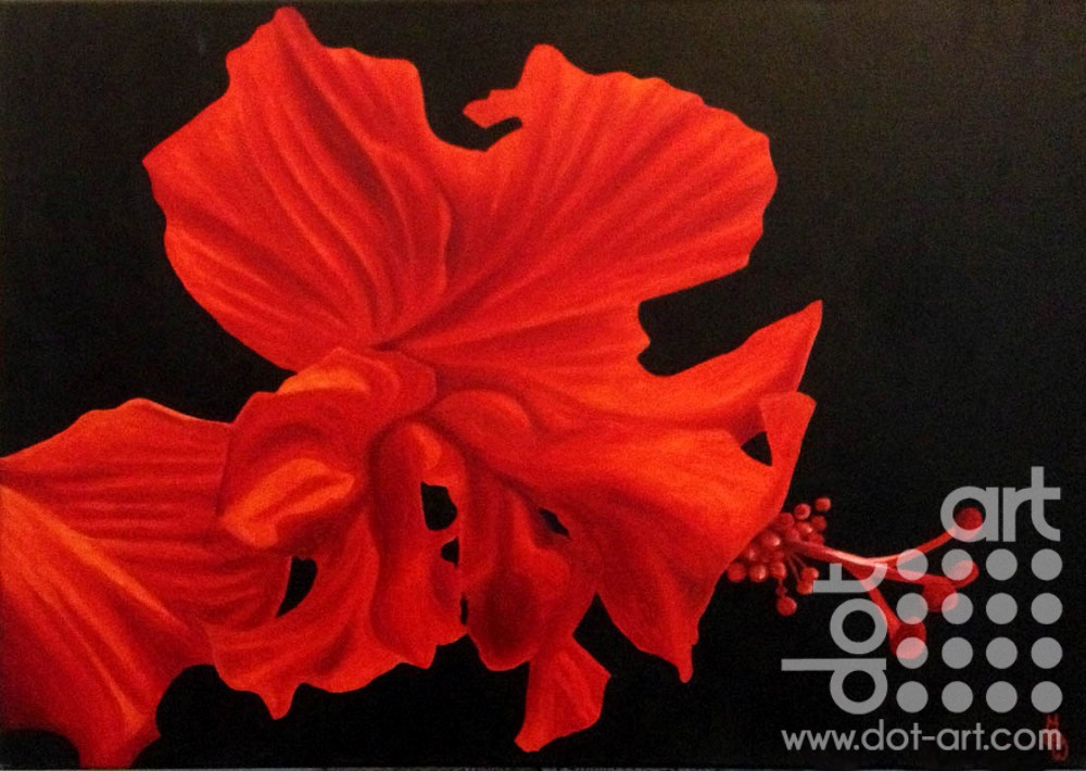 red hibiscus by madeleine pires