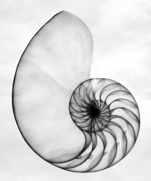 X-Ray shell by Phill Gornall