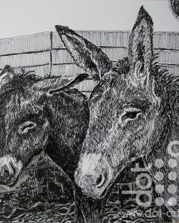 Donkeys At Erddig by Beryl Jean Worth