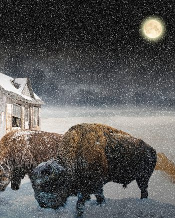 Buffalo-Winter-Vincent-Kelly