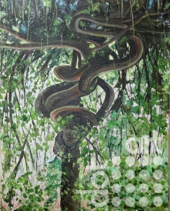 Python Tree, calderstones by Steve Bayley