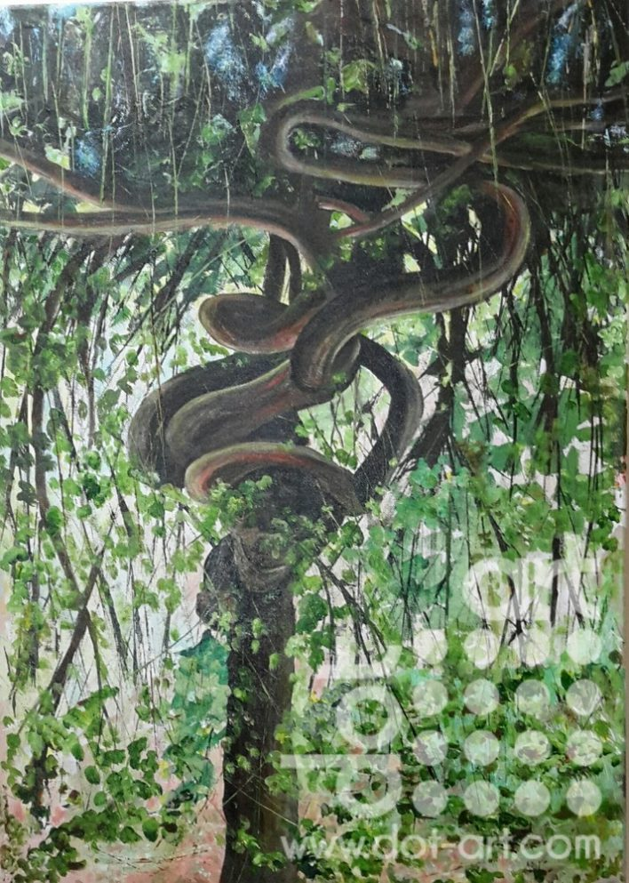Python Tree, calderstones by Steve Bayley