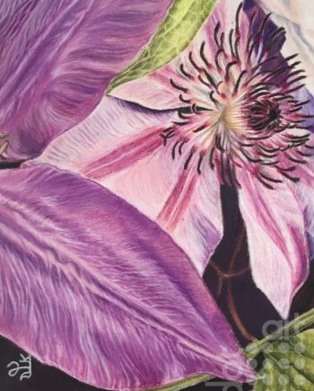 Clematis close up-Laleh Kamalian