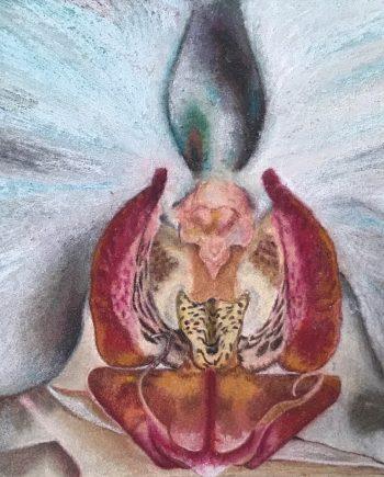 Orchid close up-Laleh Kamalian