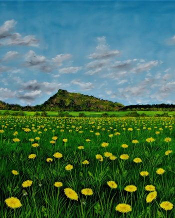 A feild of Golden Dandelions-Hazel-Thompson