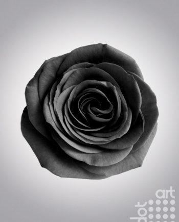 Flor de Amor - Florence