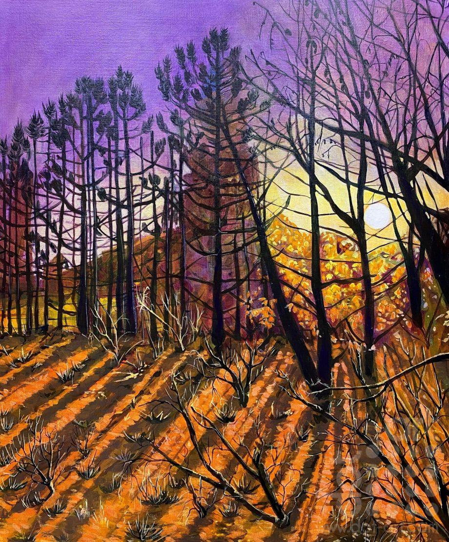 Sutton Manor Trees 1-Natalie Gilmore