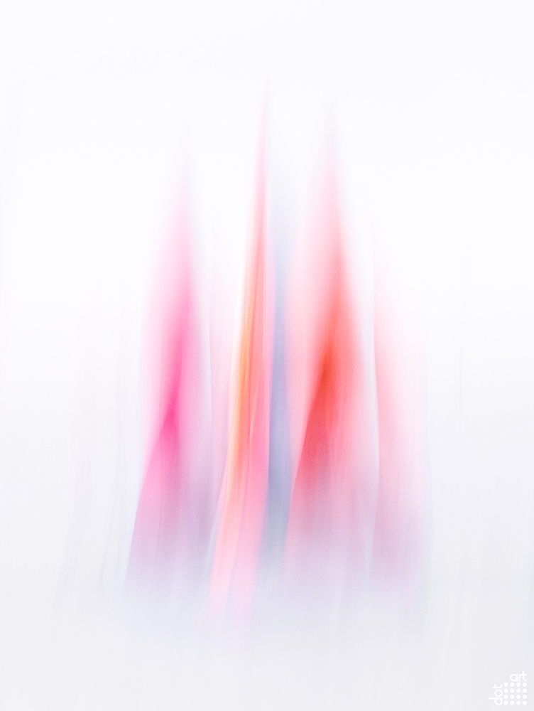 164_Magenta Sails by Mark Reeves_8186