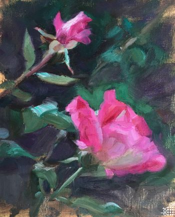 Garden Rose-Jacob-Gourley