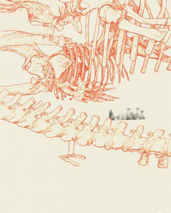 mammals-Oliver McAinsh