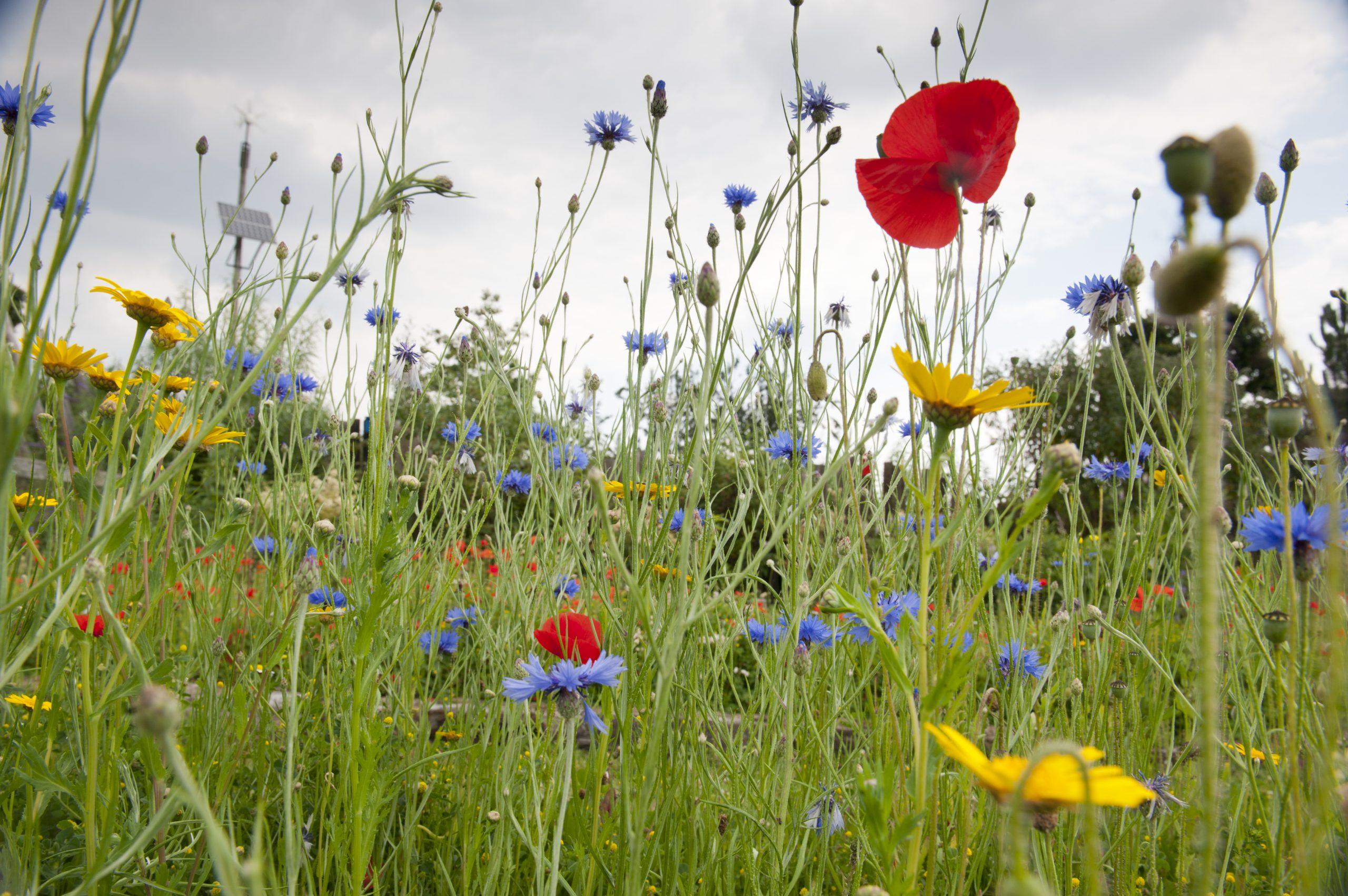 Heavy Gardening - wildlife recording