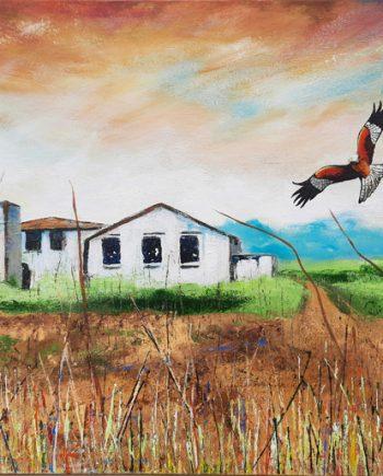 Red Kites-Steve-Bayley