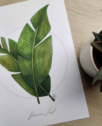 Banana Leaf - Anne Wiziack